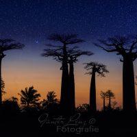 Baobaallee, Morondava, Madagaskar | Baobab allee, Morondava, Madagascar