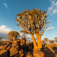 Köcherbaulmwald, Keetmanshop, Namibia | Quivertree forest, Keetmanshop, Namibia